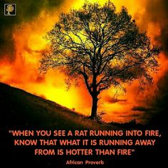 Naturally, no one in his or her right mind would choose to run into fire particularly when not attempting to save anything or anyone from perishing. Even a mad person would instinctively run from fire and not into fire. Don't think people always have good or great options to choose from. Some people have had to choose between going through a 'hell' or 'bushfire'. People are not crazy. At least not everyone you think is crazy is in fact crazy. Instead of condemning people as insane, be…