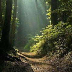 La biblia  nos enseña como andar en obediencia a Dios.  Enséñame oh SEÑOR el camino de tus estatutos y lo guardaré hasta el fin. - Salmos 119:33  Debemos guardar seguir hasta el fin el camino que Dios nos enseña. La biblia nos dice quien es ese camino:  YESHUA (Jesús) le dice: YO SOY el camino y la verdad y la vida; nadie viene al Padre sino por mí. - Juan 14:6  Dios nos ha mostrado el camino a ÉL  su hijo YESHUA (Jesús) para obedecerle hasta el fin. Amén.  The Bible teaches us how to walk…