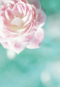 turquoise  pink -