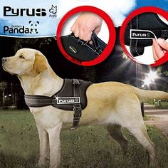 221 Best leather dog harness images | Dog harness, Leather dog ...