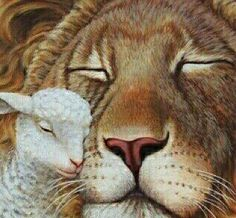 The lion and the lamb shall lie down in peace when Jesus returns!