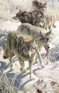 Wolf pack♡