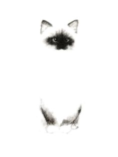 Siamese Cat by Priscilla Moore