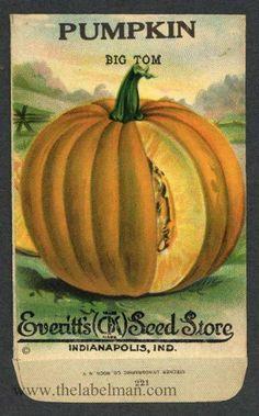 EVERITT'S SEED STORE,  Pumpkin 221, Vintage Seed Packet