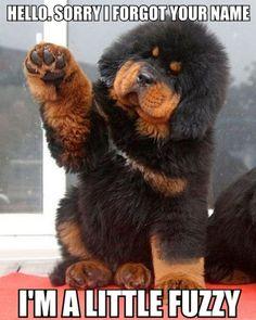 cute dog- looks like a TEDDY BEAR!!!