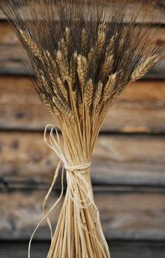 Blackbeard Wheat Bunch - 8oz - I love the black hairs on top.  Great look for a wedding centerpiece.