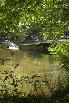 Ruisseau, les insectes, les pieds dans l'eau fraiche