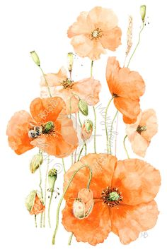 Blooming Poppies Artist Marjolein Bastin Painted 2011 Medium Watercolor Subject Location Netherlands Like this painting? This painting has not been published. Botanical Illustration, Graphic Illustration, Watercolor Flowers, Watercolor Art, Marjolein Bastin, Nature Sketch, Nature Artists, Decoupage, Dutch Artists