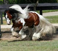Beautiful horse romping