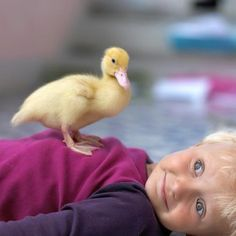A little toddler and his suprize at his pet duck so close to his chest. That face is priceless!  ♡