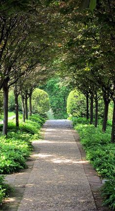 Dumbarton Oaks Path - these are pears.