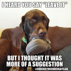 """I heard you say """"Leave it"""" but I thought it was more of a suggestion    I HEARD YOU SAY """"LEAVE IT"""" BUT I THOUGHT IT WAS MORE OF A SUGGESTION #CHUCKIETHECHOCOLATELAB   image tagged in chuckie the chocolate lab,naughty,funny dog memes,dogs,funny,stealing shoes   made w/ Imgflip meme maker"""