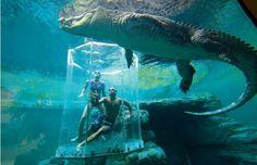 Aquarium Crocosaurus Cove, Australie