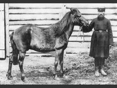 Tarpan (Equus ferus ferus, also known as Eurasian wild horse) is an extinct subspecies of wild The last individual believed to be of this subspecies died in captivity in Russia in Extinct And Endangered Animals, Endangered Species, Mammals, Age Spots On Face, Especie Animal, Horse Breeds, Fauna, Wild Ones, Zebras