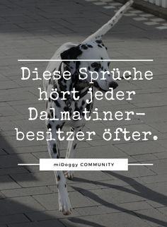    #Hund    Ideen    #Hunde    Tipps    Tricks    Ideen    Liebe    Welpen    Bilder    Humor