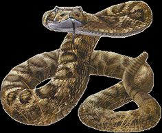 snake striking gif's - Google Search