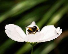 Puesta de sol jardín flores Floral Idea regalo