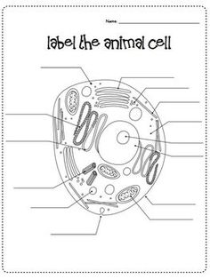 CELLS Blank Plant & Animal Cell Diagrams: Note Taking