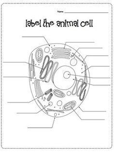 Cells Microscope Activity Unit Cells Worksheet Plant And Animal Cells Animal Cells Worksheet