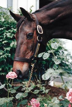 This horse is smelling the roses! Smart horse! They love nature, too!