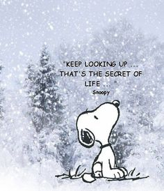 Keep looking up, that's the secret of life | SayingImages.com