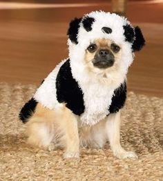 amy watson pandaposse on pinterest