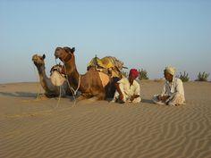 Rajasthan Desert Safari in Sea of Yellow Sand - Desert Safari Jaisalmer
