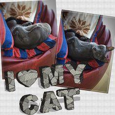 obrázky Womans mačička