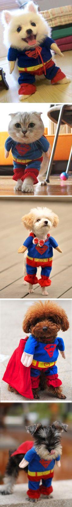 Pets Superman Costume - AMAZE!
