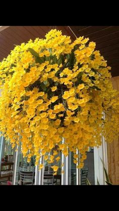 Container Gardening Flowers Full Sun - New ideas Exotic Flowers, Love Flowers, Yellow Flowers, Beautiful Flowers, Yellow Orchid, Rare Orchids, Dendrobium Orchids, Delphinium, Hanging Flower Baskets