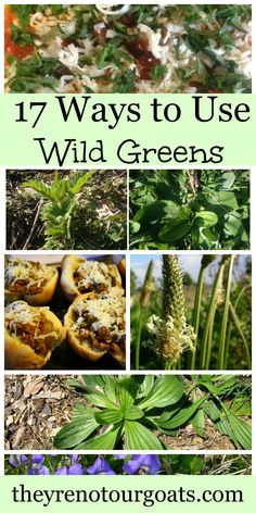17 Ways to Use Wild Greens...need to save this because Will loves to eat these :)