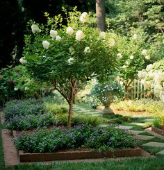 We have the top hydrangea picks, whether you're looking for flowers that fare we… - front yard landscaping ideas entryway Hydrangea Tree, Hydrangea Garden, Garden Shrubs, Lawn And Garden, Limelight Hydrangea, Little Lime Hydrangea, Climbing Hydrangea, California Front Yard Landscaping Ideas, Backyard Landscaping