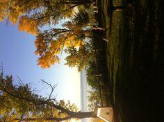 Fall on the east side of lake Winnebago.