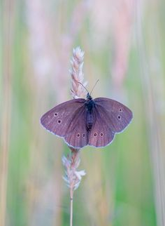 Photograph Butterfly by André  Kriesten on 500px Good Morning