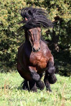 .Beautiful strong horse