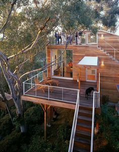 Tree House - Light on the Land and Hugging the Trees in San Diego - Design by Safdie Rabines Architects
