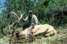 Nothing epitomizes the do-it-yourself spirit quite like bowhunting public land elk. Hunting Camo, Hunting Tips, Wet Spot, Bowhunting, Game Birds, Animal Games, Hunting Season, More Pictures, Archery