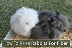 How To Raise Rabbits For Fiber - perfect from making wool... #rabbits #homestead #homesteading