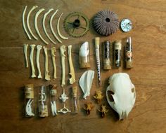 Curio Box  Collection of Bones Specimens and by PULPmiscellania, $165.00