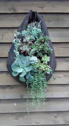 Karen Marable created this nice succulent arrangement in a horsecollar. Karen Marable created this n Artificial Cactus, Artificial Succulents, Cacti And Succulents, Planting Succulents, Planting Flowers, Succulent Wall, Succulent Arrangements, Container Plants, Container Gardening