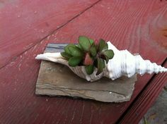 SeekingSucculents  - Sophisticated Upcycled Succulent Design - on Etsy
