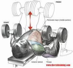 weights, personal training, muscle, exercise, form, technique, machines, fitness, bodybuilding, toning, fit, female, male, train, gym, workout, abs, fitness, motivation, training, drive, success, ambition, healthy, health, girl, guy. #benchpressweighttraining
