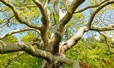 Glued to your phone? Need a sense of perspective? One veteran tree-climber argues we should seek salvation in the branches – and reveals his five favourites in London London Plane Tree, Bushes And Shrubs, Tree Surgeons, Climbers, The Guardian, Branches, Perspective, Environment, Heaven