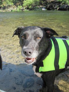This doggy life jacket keeps pets afloat, visible and safe when playing in the water. These are especially ideal for little dogs. (Photo credit: Melanie Morrill)