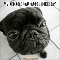 """""""Our food situation is unacceptable!"""" ・・・ www.jointhepugs.com #pug"""