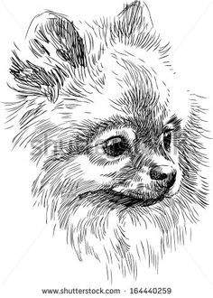 Pomeranian Stock Photos, Images, & Pictures   Shutterstock