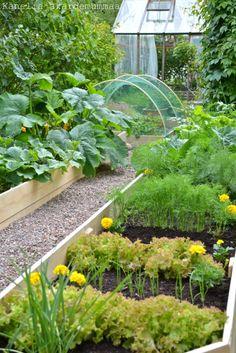 Garden Landscape Design, Garden Landscaping, Backyard Farming, Green Life, Vegetable Garden, Homesteading, Home And Garden, Vegetables, Nature
