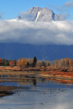 Yellowstone and the Greater Yellowstone Ecosystem