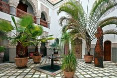 Leafy palms, date palms, fronds, patterns and lush green