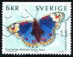 Junonia orithya wallacei,  Blue pansy,  Eyed pansy or Blue argus. Post stamp from Sweden, circa 1999